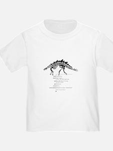 Stegosaurus Bones T