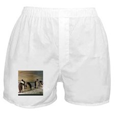 Penguins Boxer Shorts