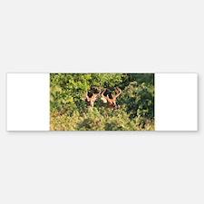 Bucks in Velvet Bumper Bumper Sticker
