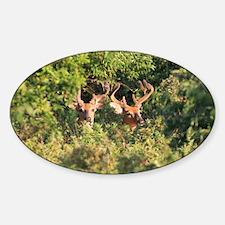 Bucks in Velvet Decal