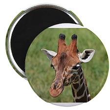 """Giraffe 2.25"""" Magnet (10 pack)"""