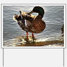 Duck bathing Yard Sign