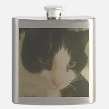 SonicMeow I Flask