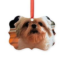 Shitzu Babie Ornament