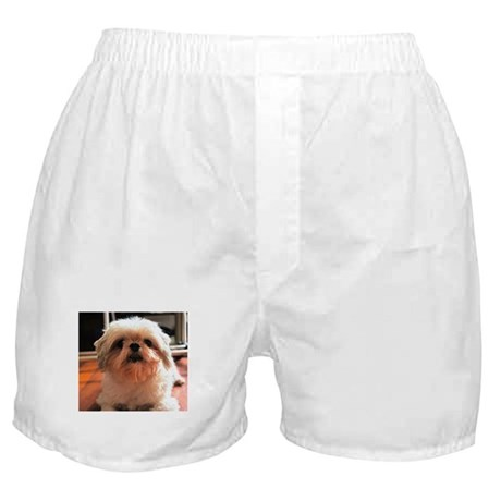 Shitzu Babie Boxer Shorts