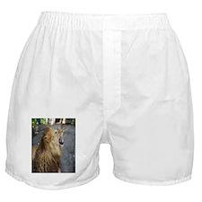 Smiling Lion Boxer Shorts