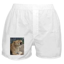 Smiling Lioness Boxer Shorts