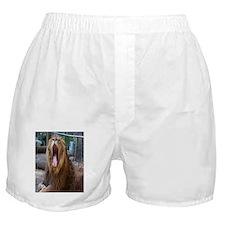 Lion Yawning Boxer Shorts