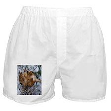 Mufasa Obama 2 Boxer Shorts