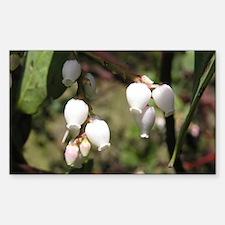 Manzanita Flower Rectangular Decal