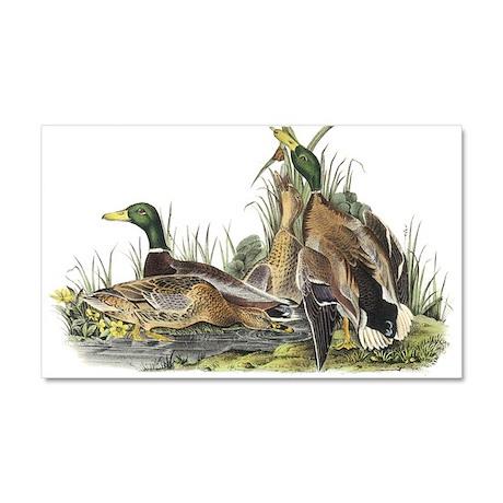 Mallard Duck Car Magnet 20 x 12