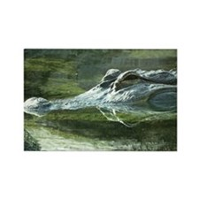 Alligator Photo Rectangle Magnet