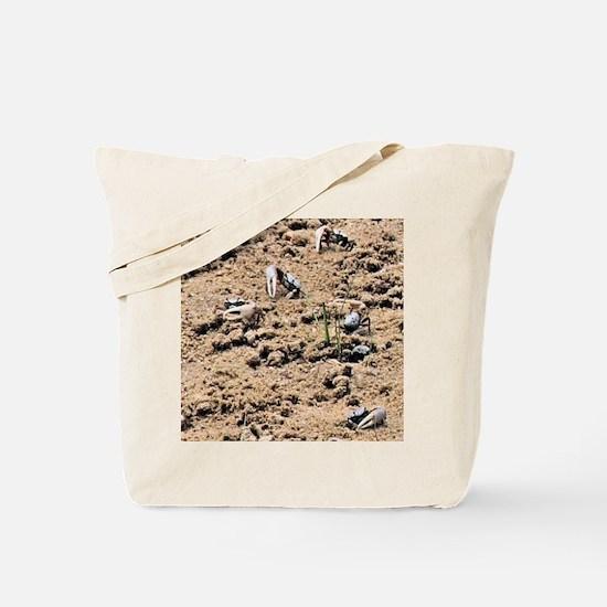 FIDDLER CRAB Tote Bag