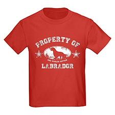 Labrador T