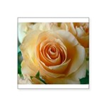 Apricot Colored Rose Square Sticker 3