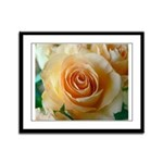 Apricot Colored Rose Framed Panel Print