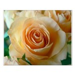 Apricot Colored Rose Small Poster