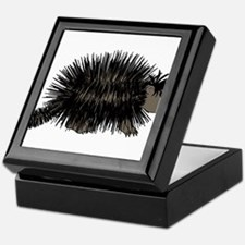 Cartoon Porcupine Graphic Keepsake Box