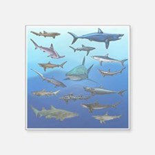 "Shark Gathering Square Sticker 3"" x 3"""