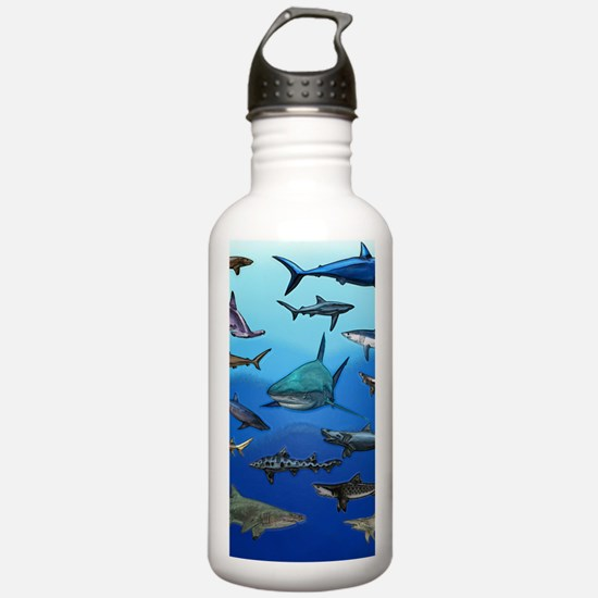 Shark Gathering Water Bottle