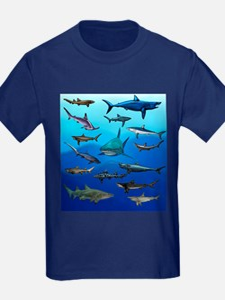 Shark Gathering T