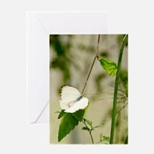 Butterfly Elegance Greeting Card