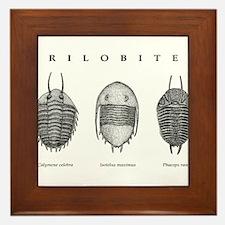Trilobites Framed Tile