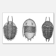 Trilobites Decal