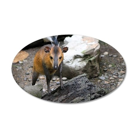 Red-flanked duiker 2.jpg 20x12 Oval Wall Decal