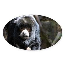 Black Howler Monkey 2.jpg Decal