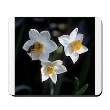 Narcissus Mousepad