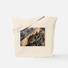 Beach Find Tote Bag