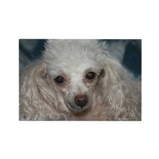honey the tea cup poodle 2.JPG Rectangle Magnet