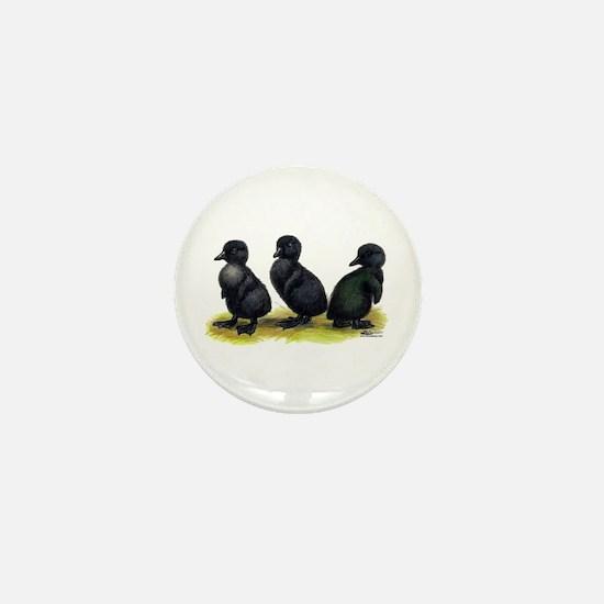 Cayuga Ducklings Mini Button