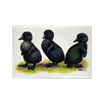 Cayuga Ducklings Rectangle Magnet (100 pack)
