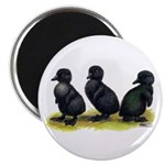 "Cayuga Ducklings 2.25"" Magnet (100 pack)"