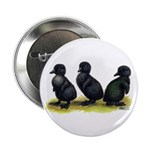 "Cayuga Ducklings 2.25"" Button (100 pack)"