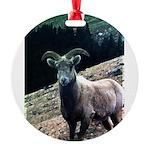 Mountain Sheep Round Ornament