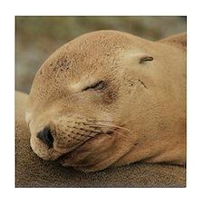 A Sleeping California Sea Lion Tile Coaster