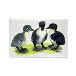 Blue Swedish Ducklings Rectangle Magnet (100 pack)