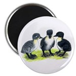 "Blue Swedish Ducklings 2.25"" Magnet (100 pack"