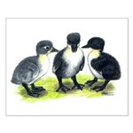 Blue Swedish Ducklings Small Poster