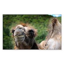 Bactrian Camel.jpg Decal