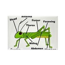 Grasshopper Anatomy Gails.PNG Rectangle Magnet