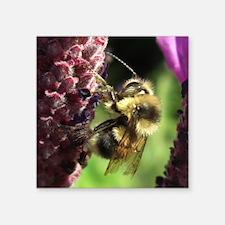 "Bumblebee Square Sticker 3"" x 3"""
