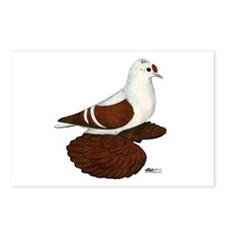 Red Wing Pigeon Postcards (Package of 8)