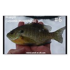 Fish #6-Bluegill Decal