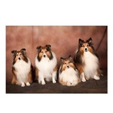 Sheltie's Rule! Postcards (Package Of 8)