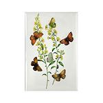 Butterflies of Summer Rectangle Magnet