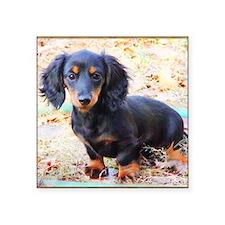 "Puppy Love Doxie Square Sticker 3"" x 3"""